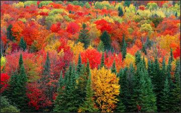 Сочинение Осенний лес