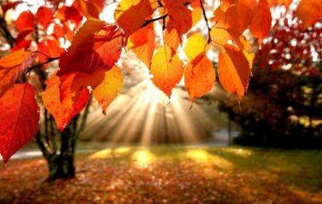 Сочинение Осенние каникулы