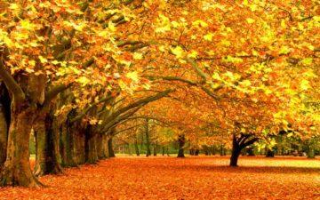 Сочинение Осенний день