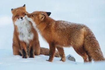 Сочинение любовь к животным