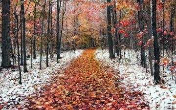 Сочинение Воскресная прогулка в лесу осенью