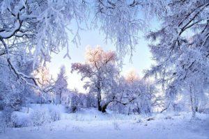 Sochinenie zima v lesu