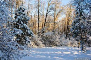 Сочинение Зимний лес