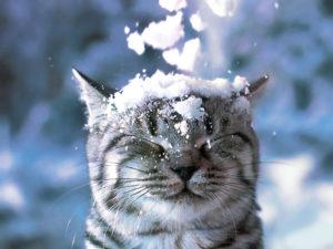 Сочинение на тему: «Зимнее утро»